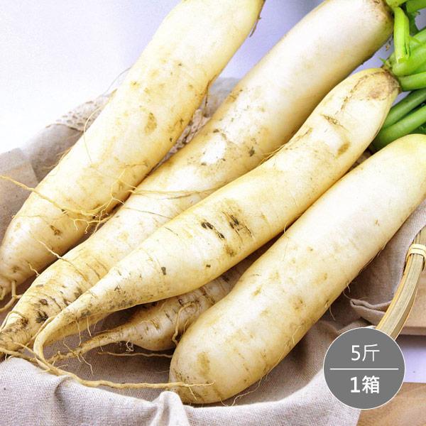*地推團購*【高雄美濃】白玉蘿蔔5斤