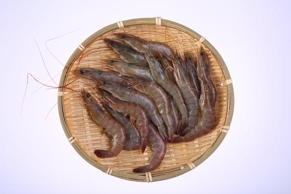 台灣友善養殖白蝦