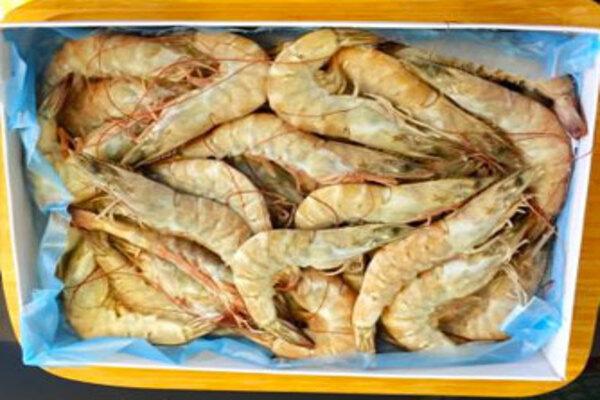 活凍大白蝦
