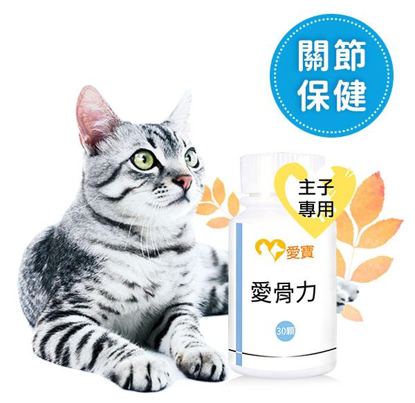 貓貓-愛骨力30顆/瓶 寵物,貓貓,貓關節,貓骨質疏鬆, 貓關節炎,寵物保健食品,愛寶 寵物,愛骨力,寵物保健,愛寶