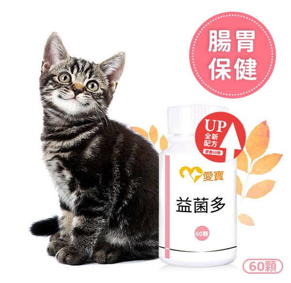 貓貓-益菌多60顆/瓶 寵物保健食品,愛寶 寵物,寵物,貓咪健康食品,貓貓,貓貓拉肚子,貓貓吐,貓貓腸胃,貓貓反胃,貓貓吐酸水