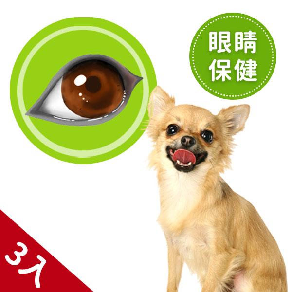 狗狗-睛亮寶3入組60顆/瓶 淚痕,狗,玉米黃素,白內障,眼屎,眼睛,葉黃素,青光眼,葉黃素推薦,視網模剝離,白內障手術,眼壓高,雷射眼睛