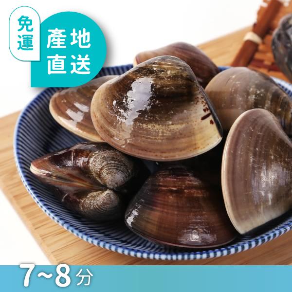 台西產銷履歷冠軍文蛤(小) 生態混養,冠軍文蛤,產銷履歷,益生菌養殖,當日現撈