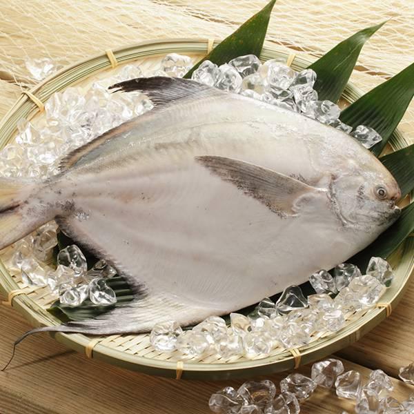 限量野生大白鯧500g 年菜首選,年菜食材,白鯧,野生白鯧,冷凍魚,冷凍海鮮,海鮮宅配,白鯧 哪裡買