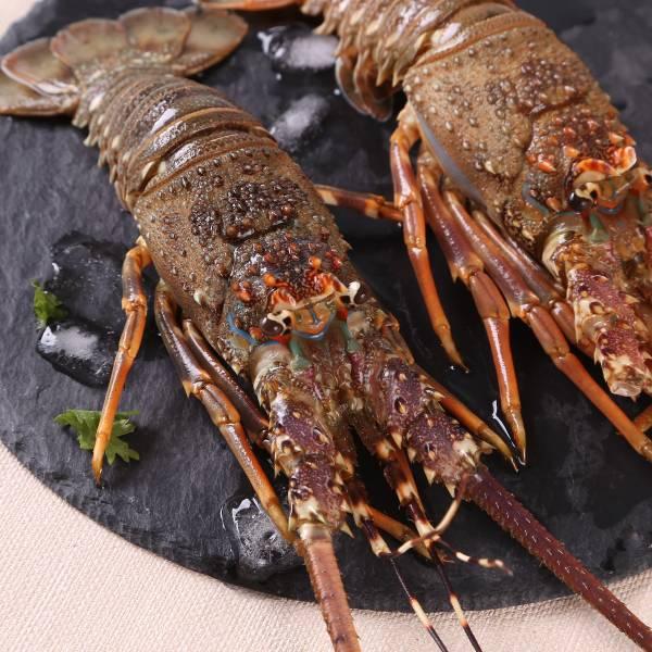 野生活凍鮮嫩龍蝦 國產龍蝦,龍蝦,龍蝦宅配,海鮮宅配,冷凍海鮮
