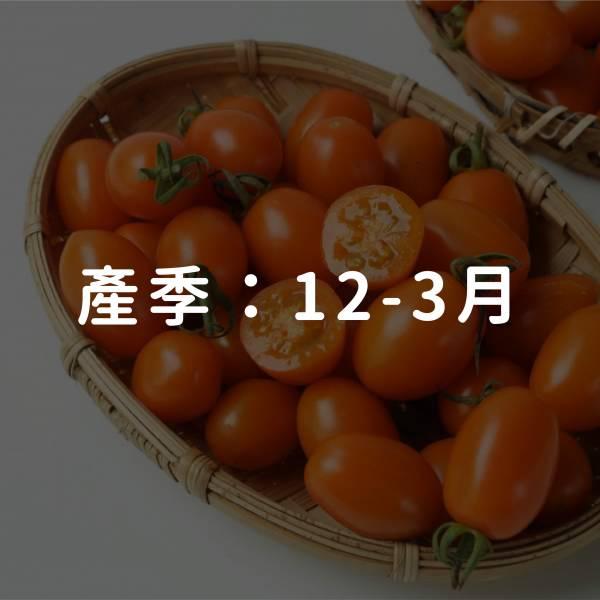 美濃鮮採橙蜜香小番茄5台斤(免運)