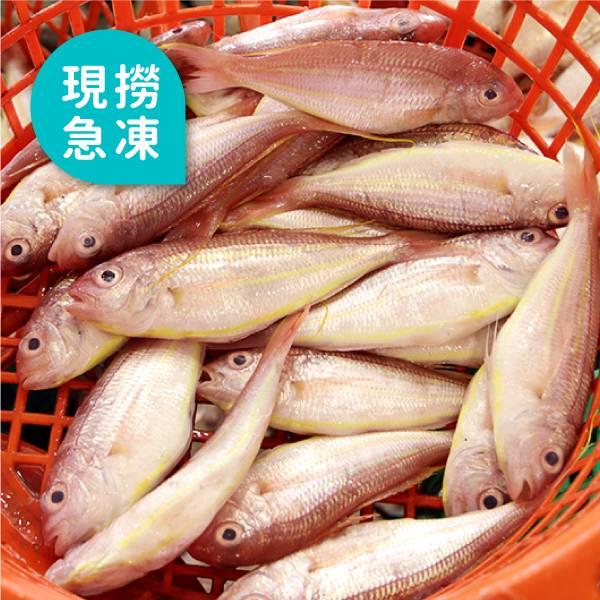 現撈急凍金線魚