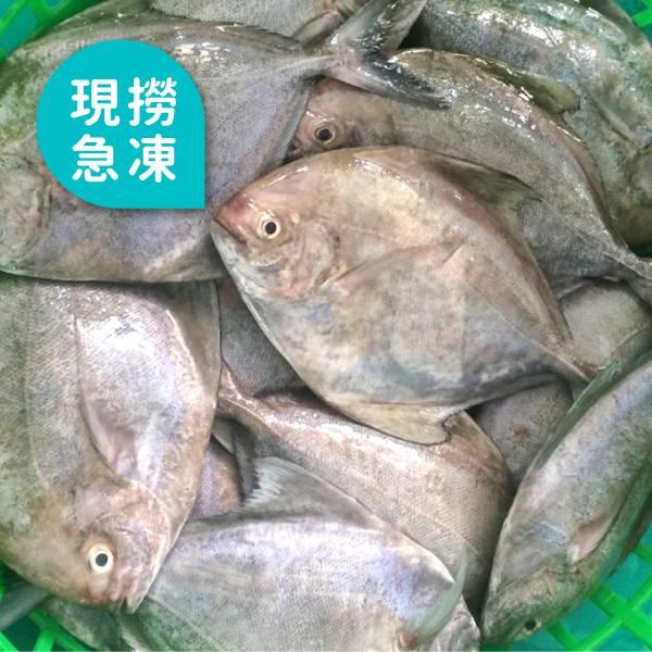 現撈急凍烏鯧魚