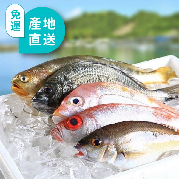 現流海魚5尾組合包(週六到貨) 冰鮮直送,肥美海魚,隔日到家,當日現撈,冷凍魚,冷凍海鮮,海鮮宅配,梓官漁會
