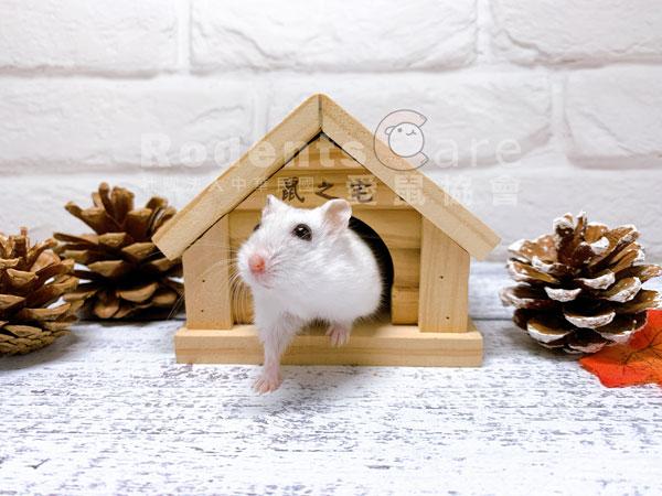 PetBest 鼠之宅 原木小木屋 木頭窩 PetBest 鼠之宅 原木小木屋 木窩 倉鼠小窩