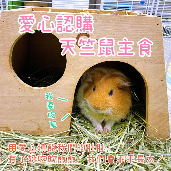 愛心認購 天竺鼠類 主食 愛心認購 天竺鼠類 主食