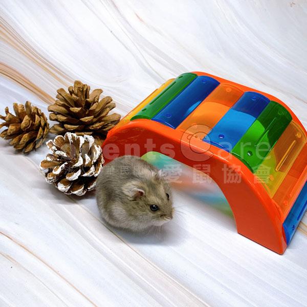 ferplast 義大利 飛寶 BRIDGE 鼠彩橋 鼠鼠彩色拱橋 塑膠玩具 ferplast 義大利 飛寶 BRIDGE 鼠彩橋 鼠鼠彩色拱橋 塑膠玩具