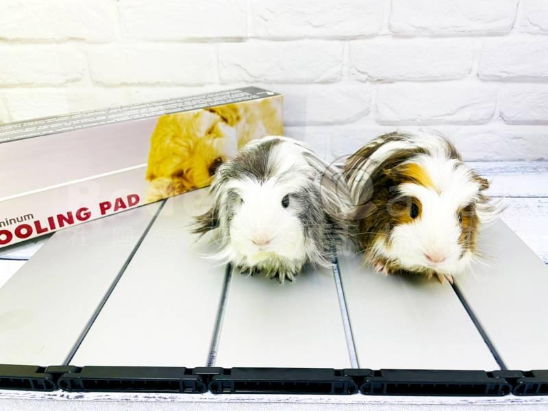 寵物鼠專用超酷涼涼墊 鼠用涼墊 降溫 散熱 降溫板 降溫鋁板 單片/4片/5片 寵物鼠專用超酷涼涼墊 鼠用涼墊 降溫 散熱 降溫板 降溫鋁板