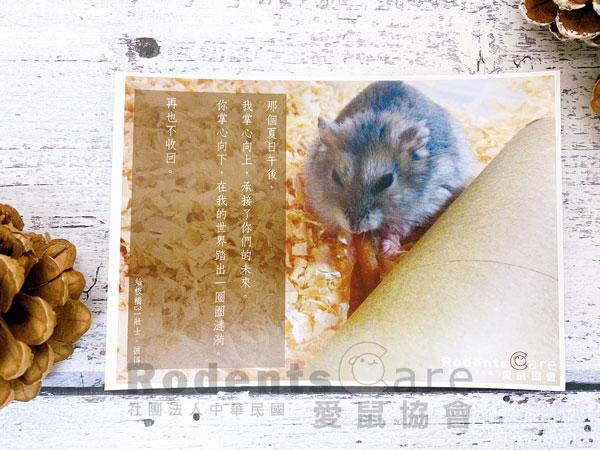 明信片 板橋31壯士-彼得。 愛鼠協會 明信片