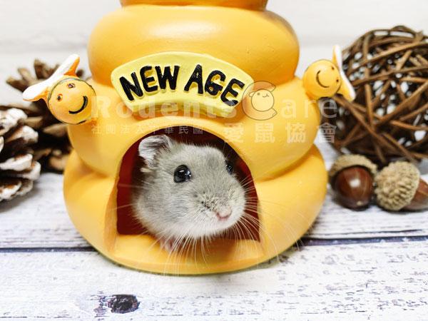 NEW AGE 紐安吉 倉鼠蜂蜜小屋 NEW AGE 紐安吉 倉鼠蜂蜜小屋