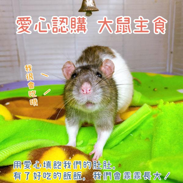 愛心認購 大鼠類 主食 愛心認購 大鼠類 主食