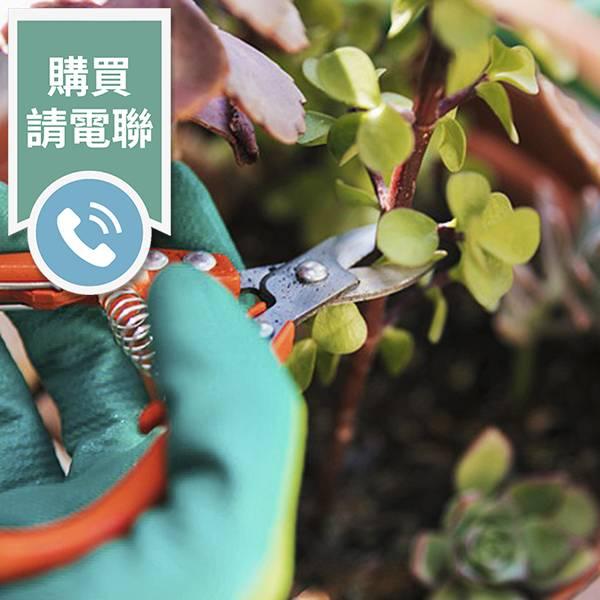 清潔大師-植物修剪(購買請電聯) 清潔大師,庇護工場,環境清潔