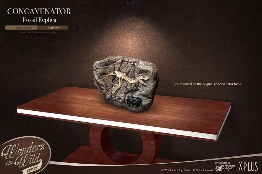 SA5004 史前動物 恐龍化石板
