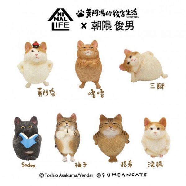 黃阿瑪的後宮生活 X 朝隈俊男聯名款 圓滾滾系列(中盒8入)