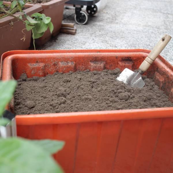 貓便當土/土壤改良資材 貓便當菜