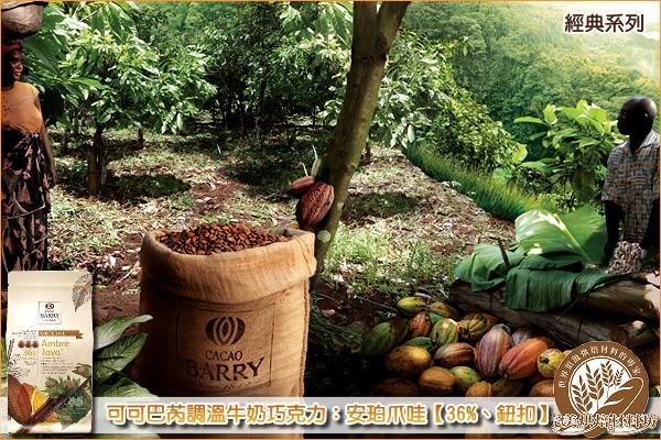 《原裝》法國可可巴芮經典調溫牛奶巧克力:安珀爪哇【36%、鈕扣】5KG《免運》 可可巴芮,Cacao Barry,牛奶巧克力