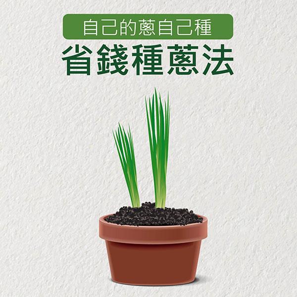 你知道蔥如何種嗎? 家裡陽台也可以成為你的開心農場 省錢種蔥法  種蔥,蔥,開心農場