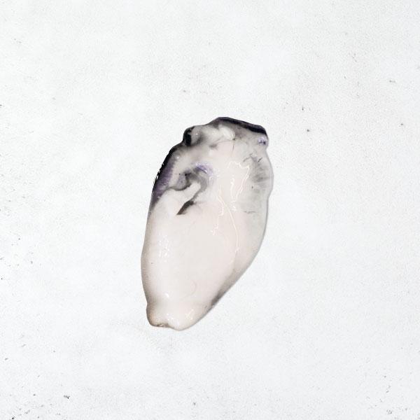 日本播磨灘牡蠣(去殼)3L