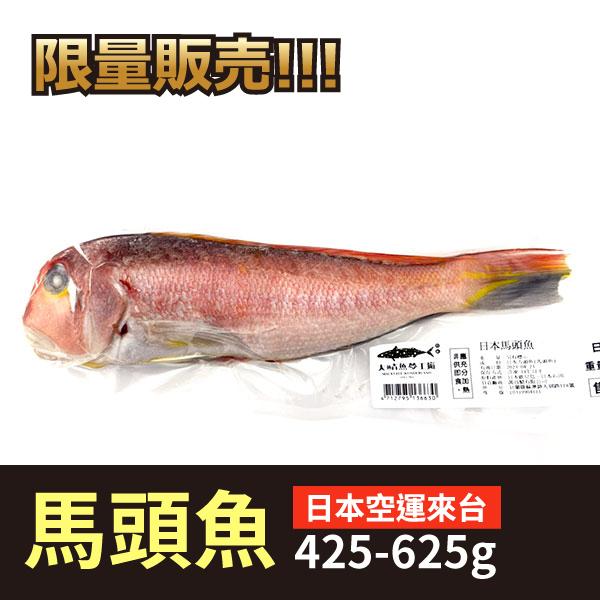 日本馬頭魚