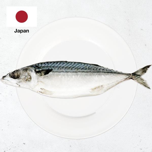 日本北海道白腹鯖魚整尾(薄鹽) 日本北海道白腹鯖魚