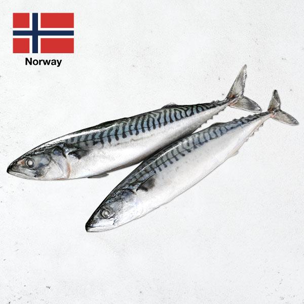 頂級挪威薄鹽鯖魚整尾 挪威鯖魚,鯖魚ptt,薄鹽鯖魚,宜蘭伴手禮,整尾鯖魚,燒烤