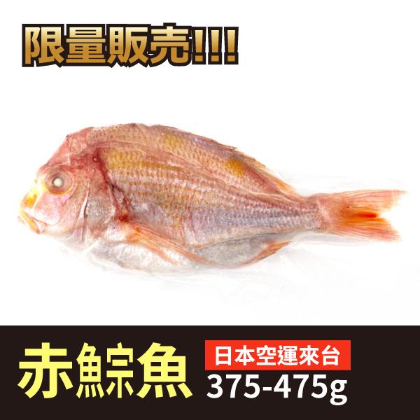 日本赤鯮魚 日本赤鯮魚,高級海鮮,紅魚,赤宗魚,做壽,辦桌,限量,清蒸