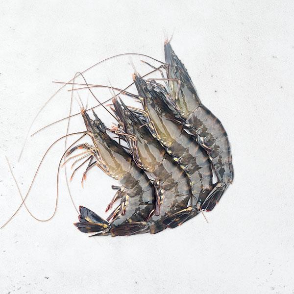 黑鑽草蝦(8p)