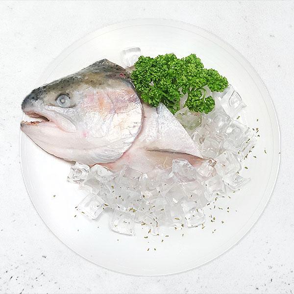 頂級挪威鱒鮭(頭) 鮭魚,鱒鮭,鱒魚,挪威