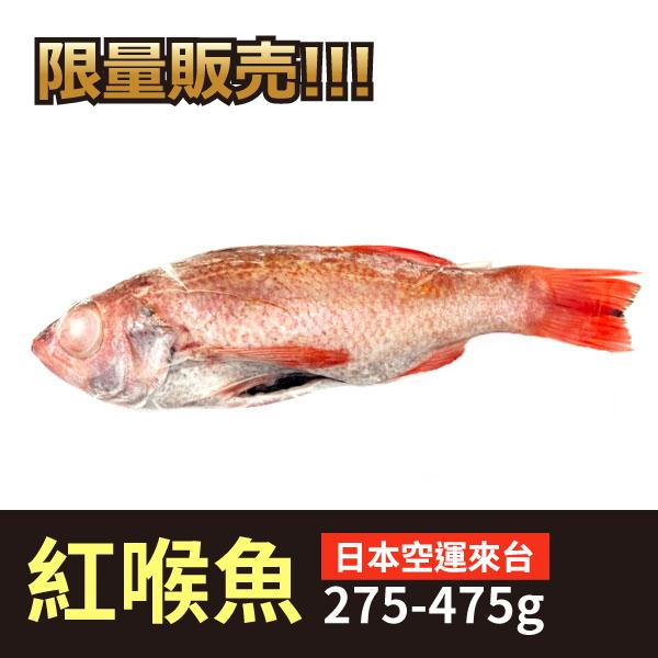 日本紅喉魚 日本紅喉魚,高級海鮮,紅喉魚,做壽,辦桌,限量,清蒸