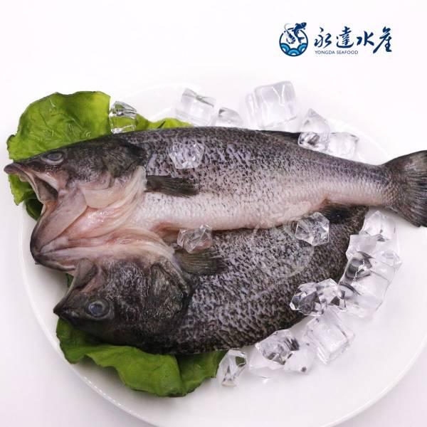 山泉鱸魚 水產,海鮮,山泉鱸魚,鱸魚,花鱸,七星鱸,寨花,魚肉,魚