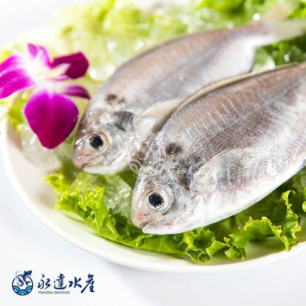 鮮凍野生肉魚 水產,海鮮,鮮凍野生肉魚,生肉魚,野生,魚肉,魚