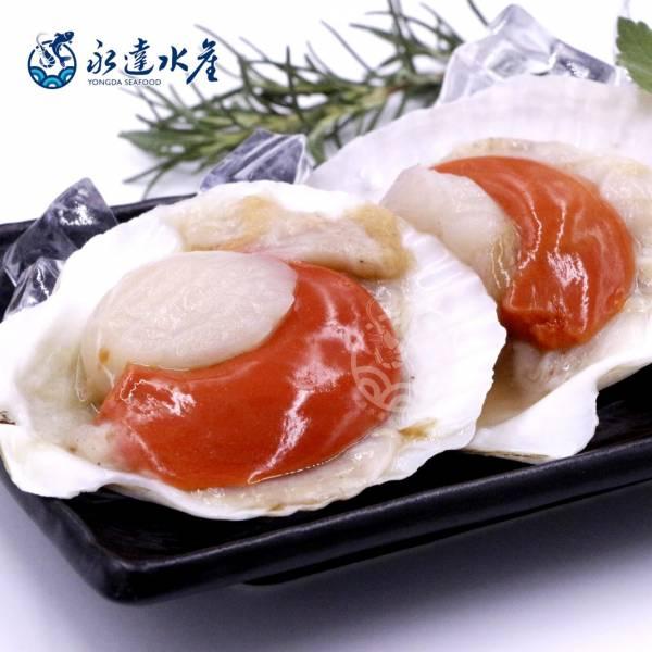 半殼扇貝 水產,海鮮,半殼扇貝,扇貝,元貝,帶子,扇貝肉,貝肉,貝