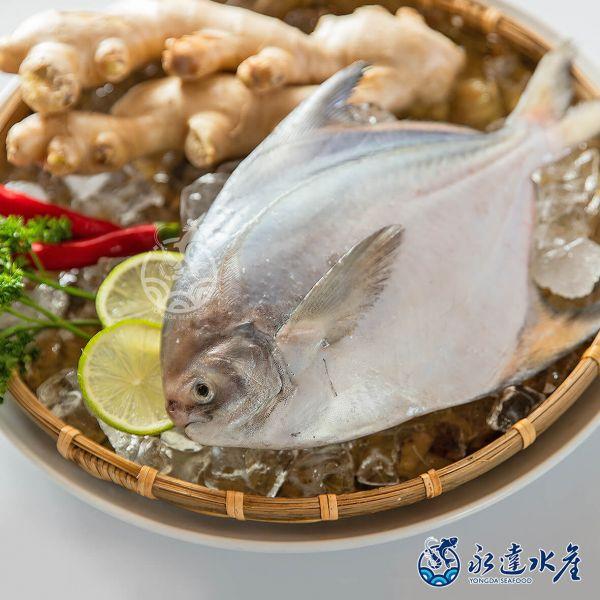 野生船凍正白鯧 /400g~500g 水產,海鮮,野生船凍正白鯧,白鯧,鯧魚,魚肉,魚