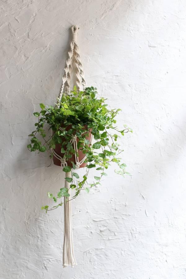 POET 編織盆栽掛飾-單層棉線