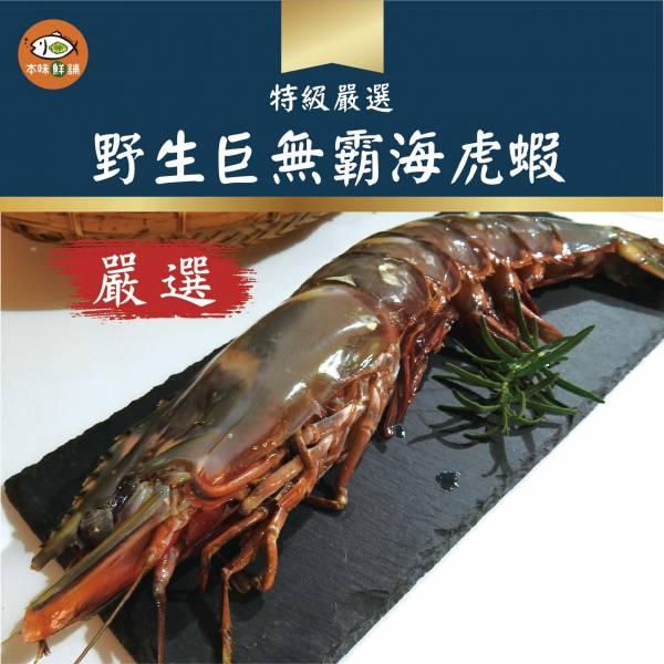 【免運】野生巨無霸海虎蝦-1組4尾(1尾200-250g) 海虎蝦