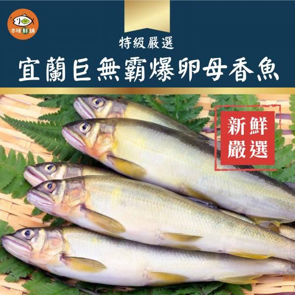 宜蘭巨無霸爆卵母香魚920g-1盒5尾 宜蘭香魚,宜蘭巨無霸爆卵母香魚,,烤肉,燒烤,約會,本味鮮舖,momo,生活市集,都有販賣
