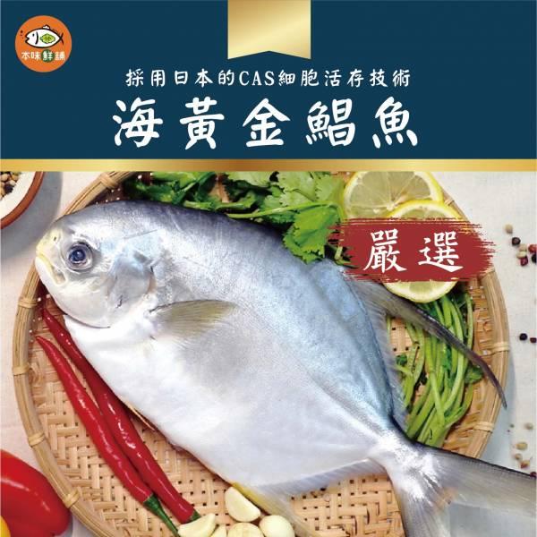 【免運】海黃金鯧魚1組5尾600g(多規格)