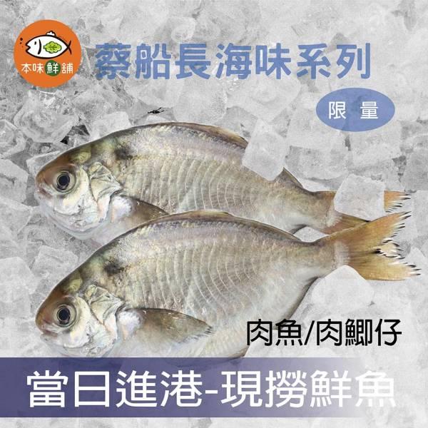 【免運限量】厚實現撈野生黃金肉魚-3組6包 #本味鮮舖#現撈仔#當日進港#新鮮海味