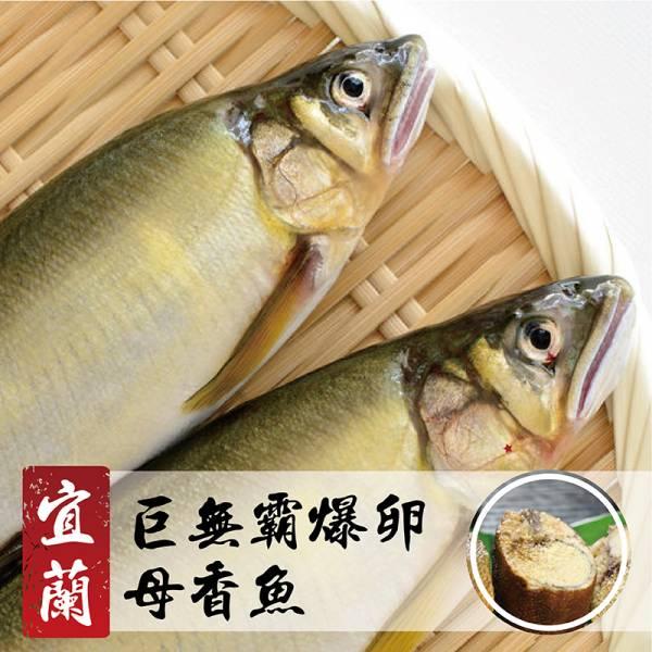 宜蘭巨無霸爆卵母香魚920g1盒4尾