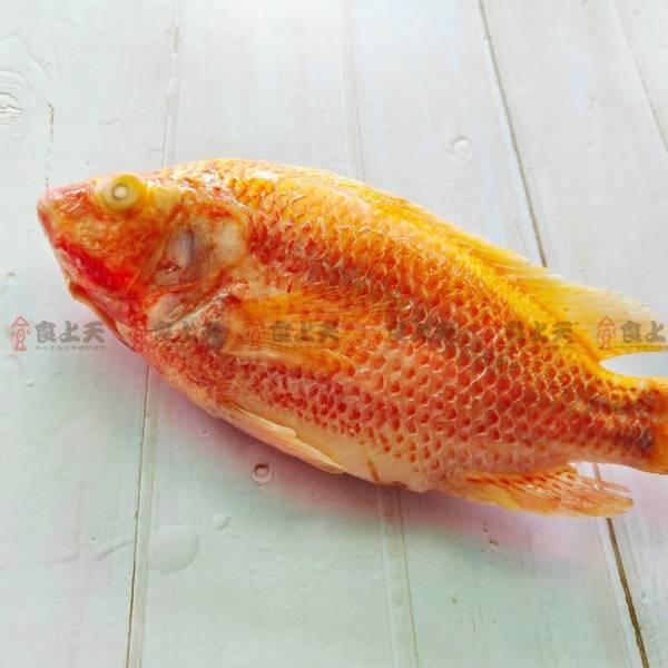 食上天-紅尼羅魚 吳郭魚,煲湯,魚,湯,鮮,鮮甜,海鮮