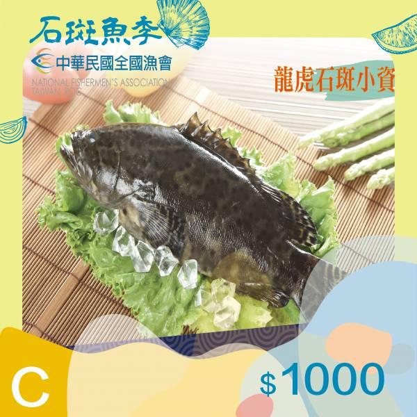 龍虎石斑小資組【全國漁會】