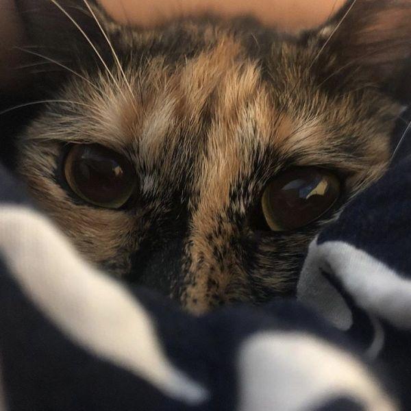 【6五3】明信片-貓最大 653,6五3,貓,貓奴
