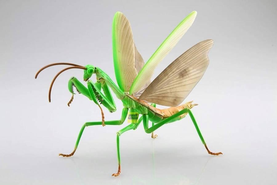 大刀螳螂 FUJIMI 自由研究23 生物編 富士美 組裝模型 FUJIMI,富士美,自由研究,生物,獨角仙,鍬形蟲,大刀螳螂 ,