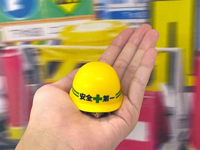 KITAN 扭蛋 安全帽龜 全5種販售 KITAN,扭蛋,安全帽龜,全5種販售