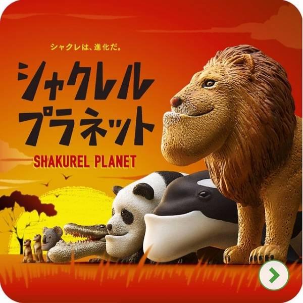 熊貓之穴 扭蛋 轉蛋 戽斗動物園 全六種 大全 扭蛋,轉蛋,厚道動物,熊貓之穴
